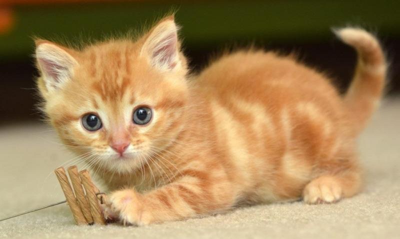 tả con mèo - ảnh 1