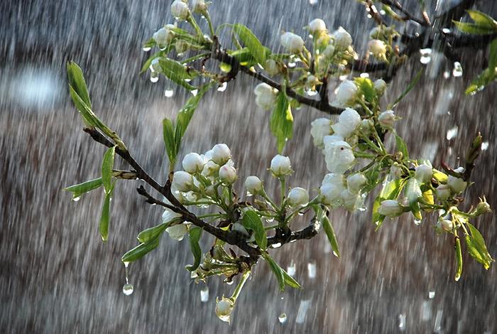 tả cơn mưa - ảnh 5