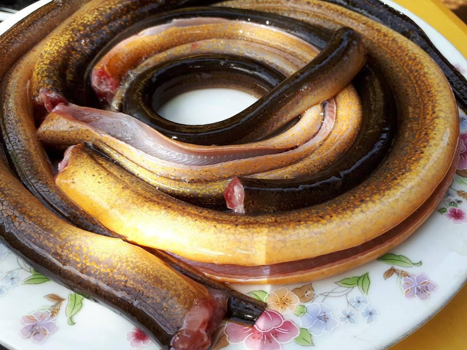lươn đồng