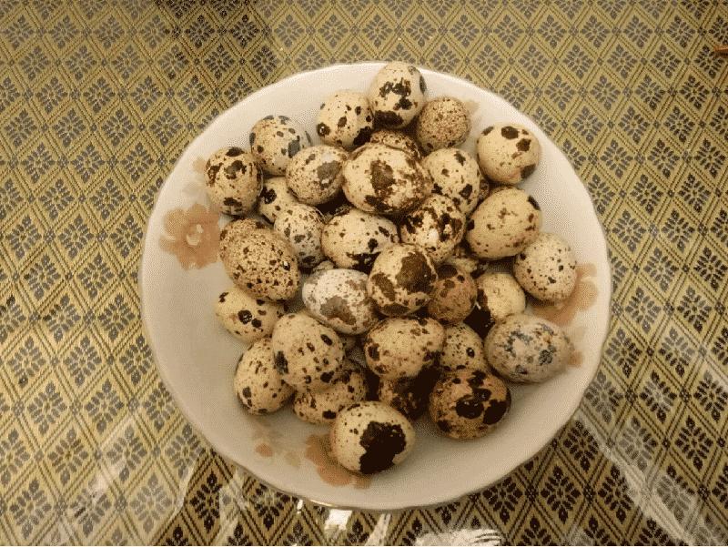 Trứng chim cút hay còn được biết đến với tên gọi là trứng cút