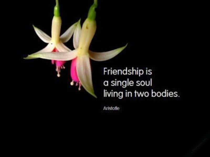 Những câu nói bằng tiếng anh hay về tình bạn