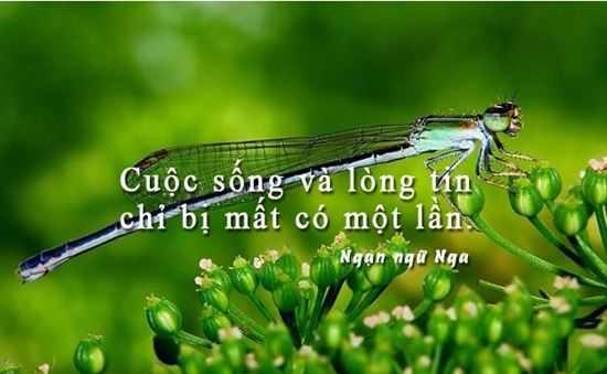 Stt hay về cuộc sống, những câu nói ý nghĩa về cuộc sống