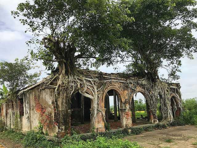 đình Tân Đông cổ kính nằm trong bộ rễ cây bồ đề ở Tiền Giang