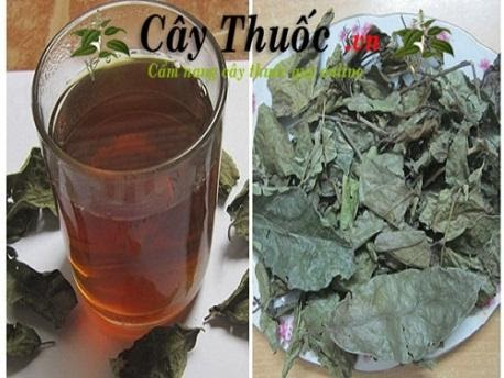 Lá cây xạ đen dùng để pha trà